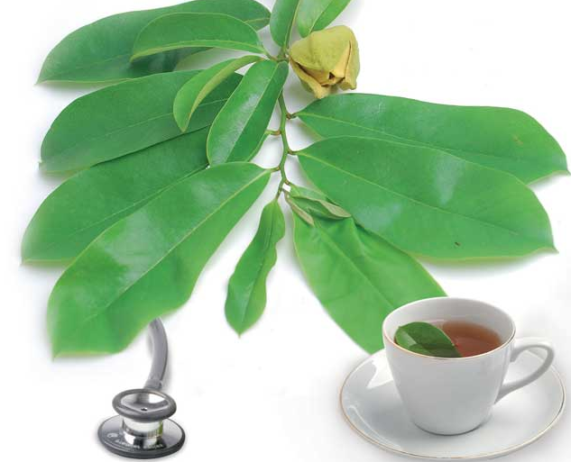 Efficacy of Soursop Leaf